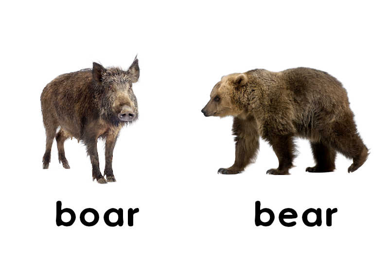 Once upon a barren moor there dwelt a bear also a boar